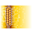 gold corn on the background vector image vector image