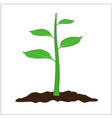 green small tree cartoon vector image vector image
