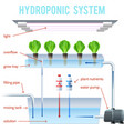 Hydroponics Colored Infographic vector image vector image