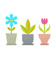 indoor flowers with blossom and big leaves set vector image