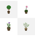 isometric plant set of grower tree fern and vector image vector image
