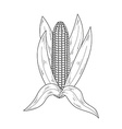 sketch corn vector image