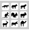 Animals2 vector image vector image