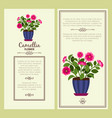 camellia flower in pot banners vector image vector image