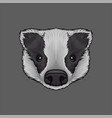 head of badger portrait of wild animal hand drawn vector image