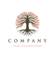 tree life oak banyan tree logo design template vector image vector image