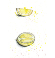 watercolor lemons vector image
