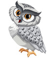 An owl vector image vector image