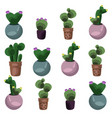 cactus set collection vector image vector image