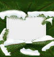 christmas tree green branches with white vector image