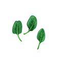 green baspinach in bright color cartoon flat vector image vector image