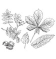 hand drawing leaves 7 vector image vector image