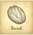 rustic bread vector image vector image