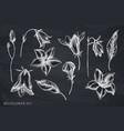 set hand drawn chalk bellflower vector image