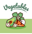 set of vegetables vector image