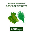 the maximum allowable dose nitrates in dill salad vector image vector image