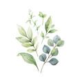 watercolor arrangement eucalyptus vector image