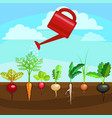 cartoon colorful fresh organic food vegetable bed vector image
