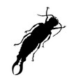 earwig silhouette isolated on white background vector image vector image
