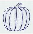 pumpkin doodle vector image vector image