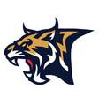 bobcat lynx wildcat angry roaring logo sports vector image vector image