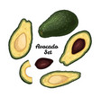 hand drawn engraved colorful avocado set isolated vector image vector image