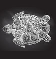 mechanical turtle hand drawn steampunk vector image
