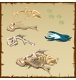 Skeletons of different fish and other items vector image