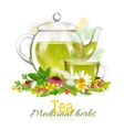 Teapot And Tea Cup Medicinal Herbs vector image