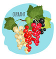 currant with green leaves white black and red vector image vector image