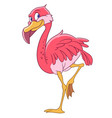 beautiful pink flamingo vector image vector image