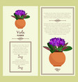 greeting card with viola plant vector image vector image