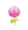 hydrangea flower floral icon realistic cartoon vector image vector image