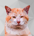 Low poly geometric of cat vector image vector image