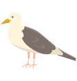 seagull with folded wings and closed beak sea vector image