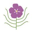 byblis gigantea australian flower vector image vector image