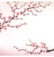 flowering branch sakura eps 10 vector image
