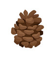 small brown pine cone woody fruit of conifer tree vector image vector image