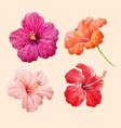 watercolor hibiscus set vector image