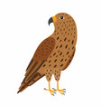 falcon bird isolated on white vector image vector image