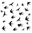 swallows picture vector image vector image