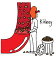 kidney to filter wastes from blood vector image