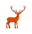 brown spotted deer with antlers standing wild vector image