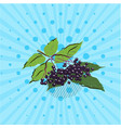branch with elderberries on a blue background vector image