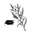 sea buckthorn drawing isolated berry vector image vector image