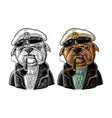 sea dog smoking pipe and dressed in captain hat vector image vector image