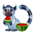 cute lemur eating a ripe juicy watermelon isolated vector image vector image
