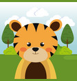 cute tiger in the field character vector image