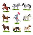 flat set of different horses hoofed mammal vector image