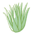 aloe flower icon cactus for botanical decoration vector image vector image